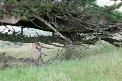 Deer by the lighthouse