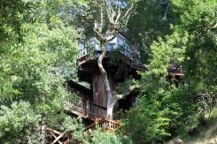It's a tree house!