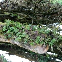 Rock plants on a tree
